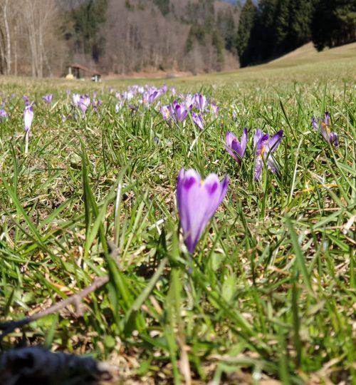 tuhinjksa_dolina_pomlad